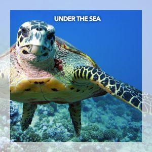 Under the sea - site